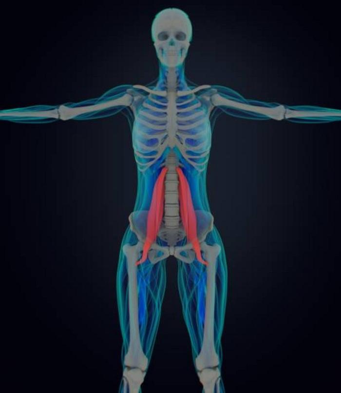 muscle psoas